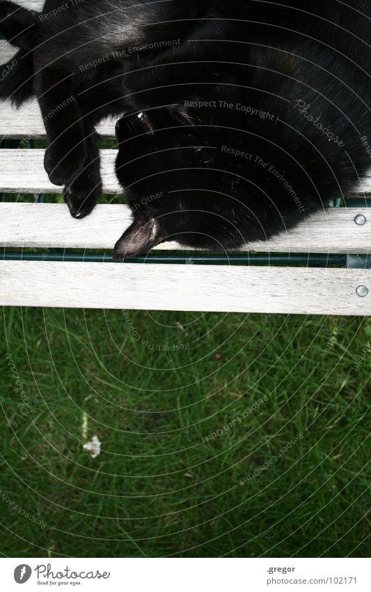 Green Calm Black Relaxation Garden Cat Sleep Chair Peace Cozy Mammal Paw Domestic cat Rest Garden chair