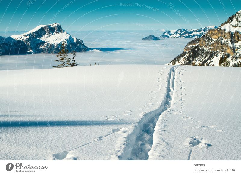 over the clouds... Winter vacation Sky Cloudless sky Clouds Beautiful weather Ice Frost Snow Alps Mountain Snowcapped peak Ski tracks Hiking Esthetic Infinity