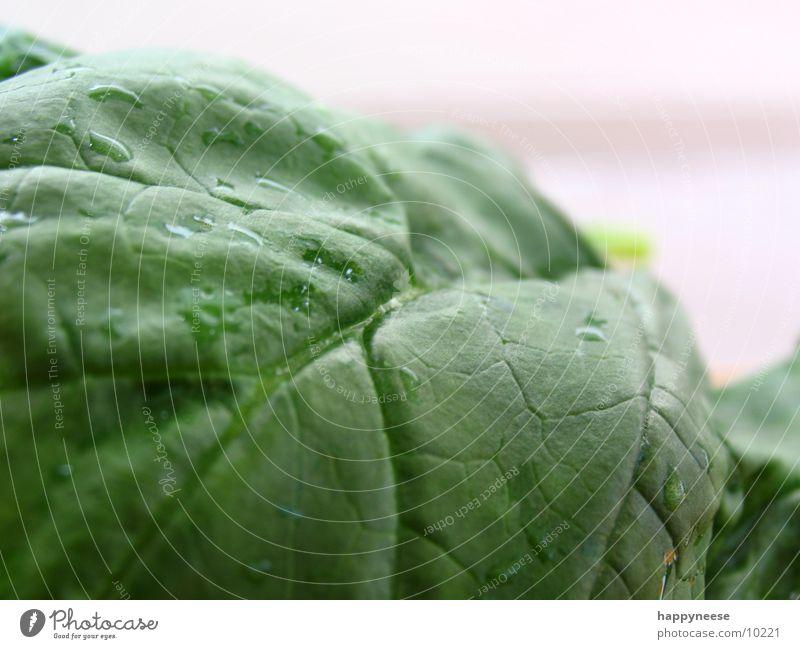 Green Leaf Healthy Fresh Vegetarian diet Spinach Healthy Eating Vegan diet Spinach leaf