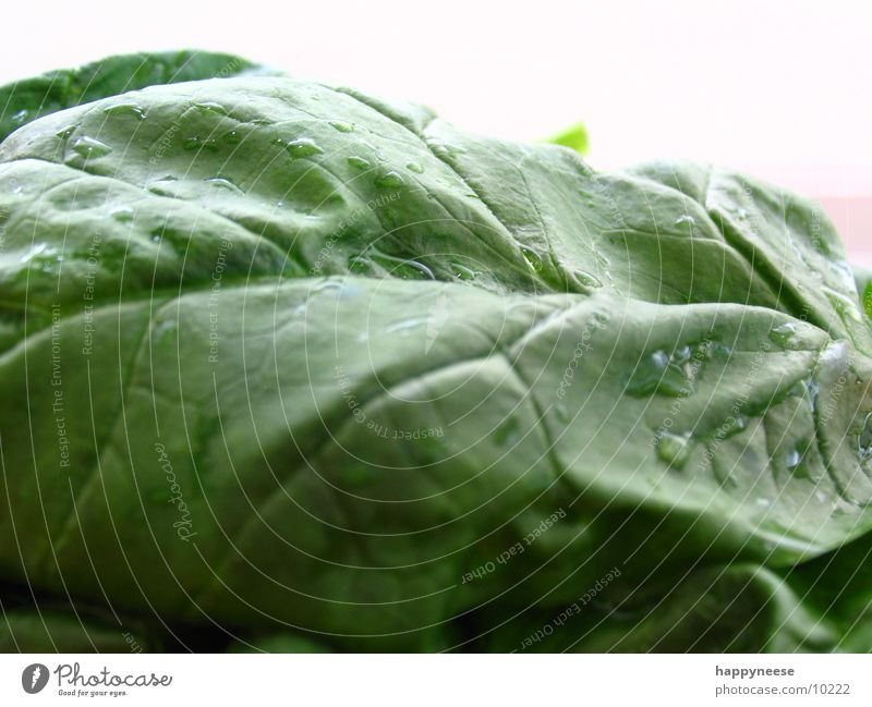 spinach again Green Leaf Spinach Macro (Extreme close-up) Spinach leaf Healthy Eating Vegetarian diet Vegan diet Fresh