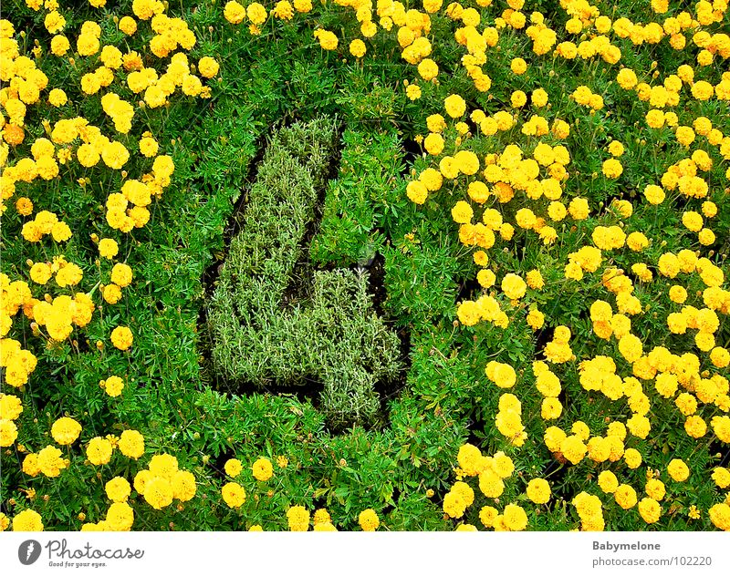 Nature Green Flower Yellow Meadow Spring Garden Esthetic Digits and numbers Lawn 4 Work of art Tasty Geneva