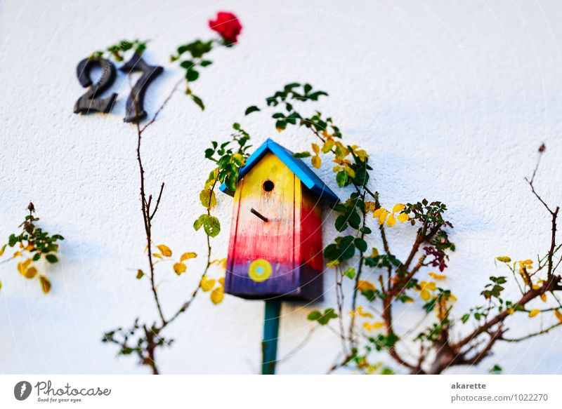 bird box Nesting box Wood Hang Sleep Uniqueness Blue Yellow Orange Red Spring fever Safety Protection Hospitality Life Curiosity Dream Homesickness