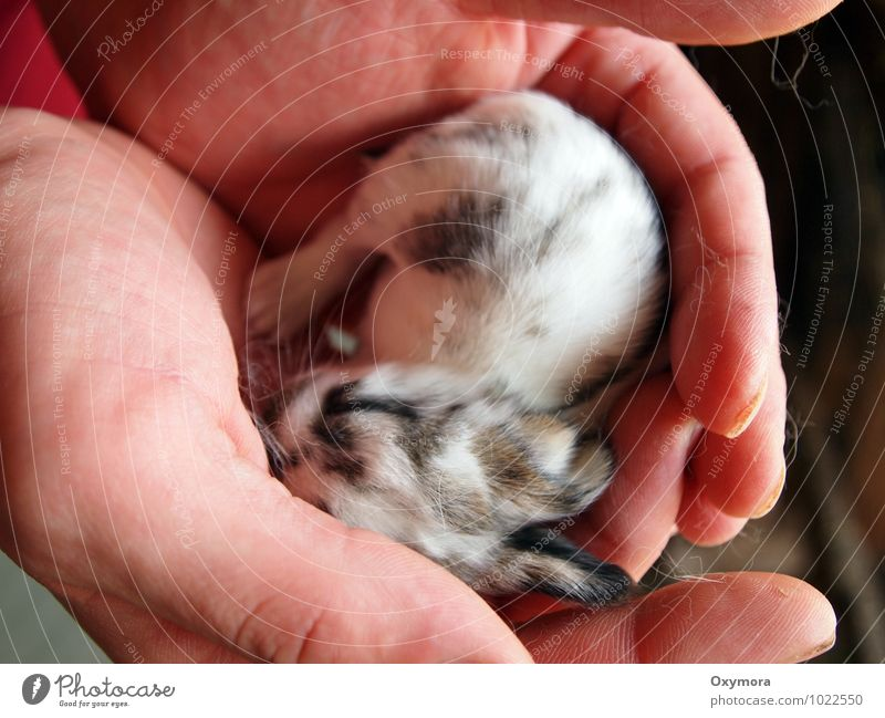 Human being White Hand Animal Black Baby animal Warmth Love Brown Together Fingers Soft Warm-heartedness New Pet Hare & Rabbit & Bunny