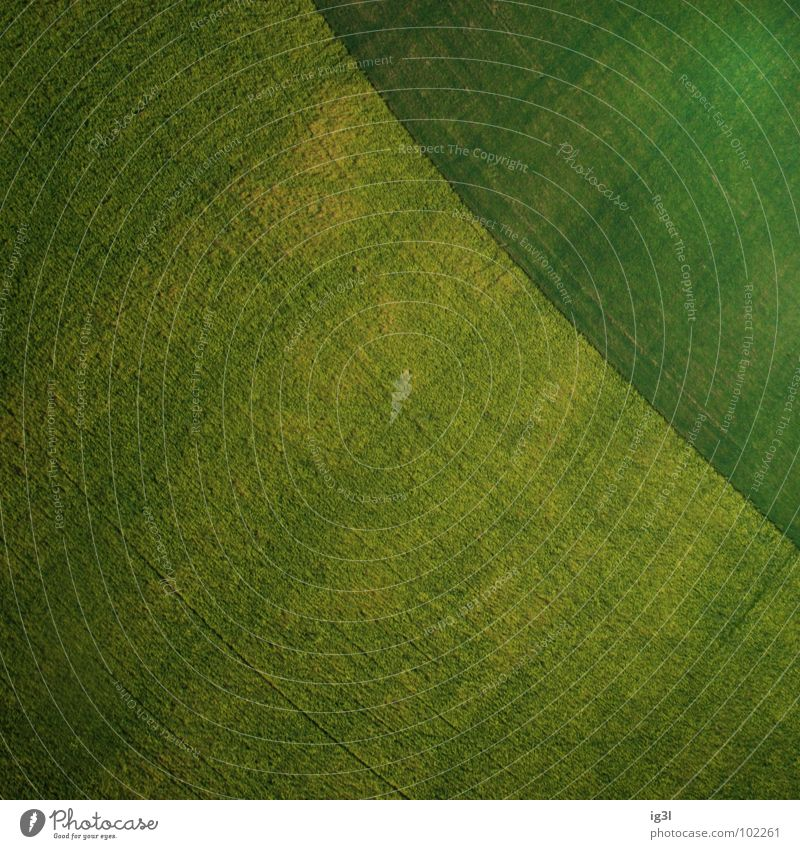 Pattern Field Background picture Diagonal Agriculture Surface Copy Space Green space Grass green Surface structure