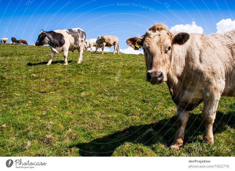 Nature Landscape Animal Mountain Environment Spring Emotions Meadow Grass Tourism Field Nutrition Trip Hill Agriculture Cow