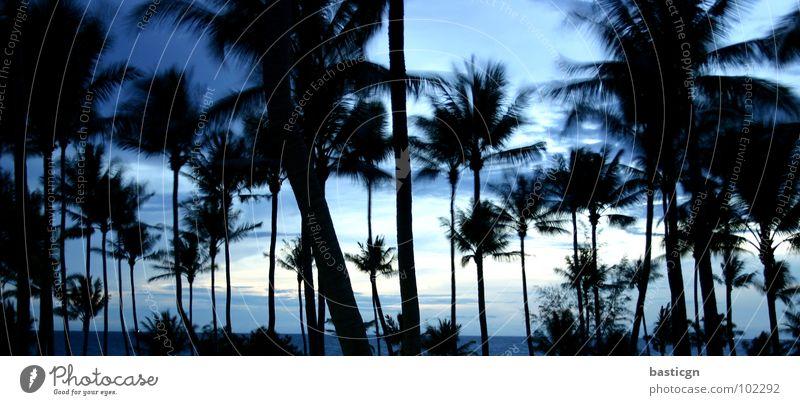 night feat. turtle island Beach Night Palm tree Dream Ocean Vacation & Travel Relaxation Ko Tao Breeze Break Joy Asia Weather Island Idyll Sky Wind Blue