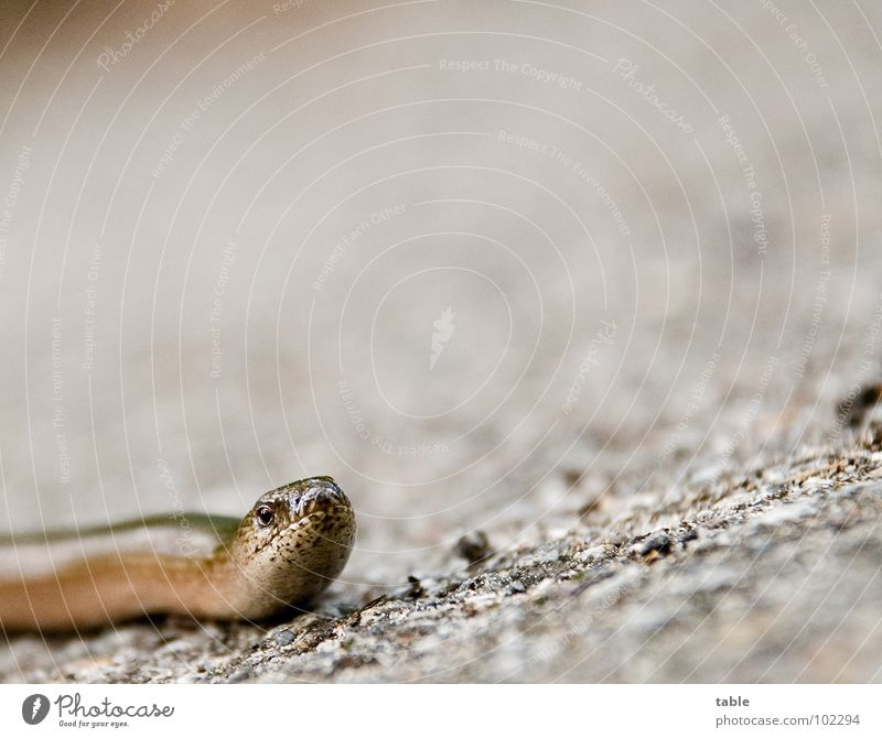 Nature Summer Animal Eyes Street Life Crazy Asphalt Living thing Environmental protection Reptiles Saurians Habitat Slow worm