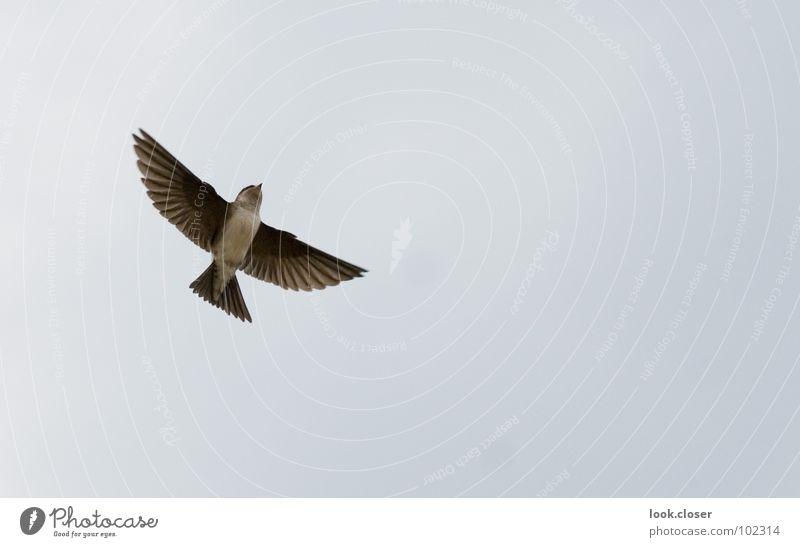 Sky White Black Freedom Happy Bird Brown Feeding Strike Animal Nest Gable Poultry Swallow Bird's colony House martin
