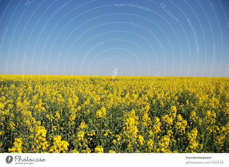 Nature Sky Flower Plant Summer Yellow Meadow Blossom Spring Background picture Canola Canola field