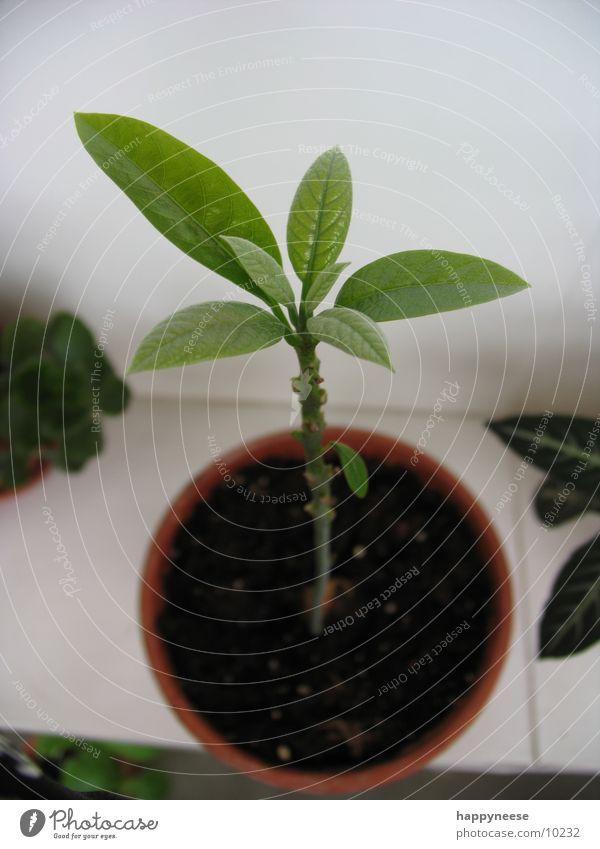 WGplant Plant Pot Bird's-eye view Green Growth Fresh Leaf Avocado Earth