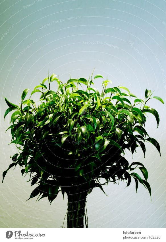 Nature Tree Green Plant Loneliness Lighting Growth Bushes Decoration Clarity Hard Placed Development Moral Invent Houseplant