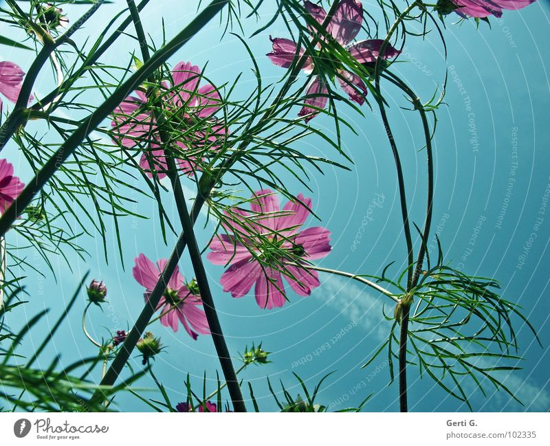 Beautiful Sky Flower Green Summer Blossom Spring Moody Pink Fresh Perspective Multiple Jewellery Many Bud Muddled