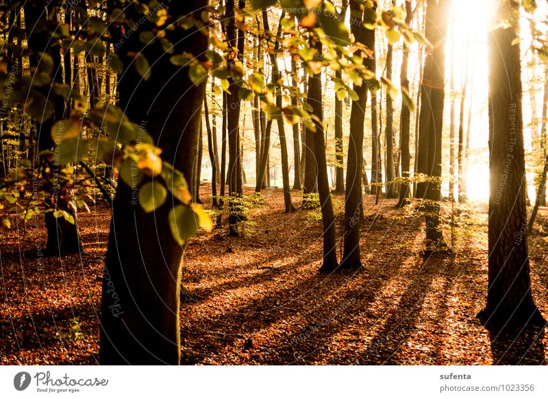 The goal before your eyes Vacation & Travel Sun Autumn Weather Beautiful weather Forest Moody Optimism Warm-heartedness Calm Life Hope Dream Contentment