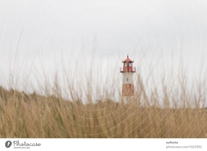 lighthouse Island Nature Landscape Animal Clouds Weather Grass Coast Beach North Sea Lighthouse Tourist Attraction Contentment Schleswig-Holstein Sylt