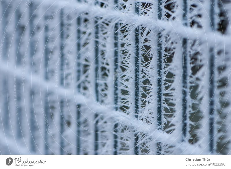 """frost Harmonious Well-being Senses Winter Snow Environment Bad weather Ice Frost Net Network Freeze Thorny Calm Fence bar fence """"Frozen,"""" ice fall Hardness"""