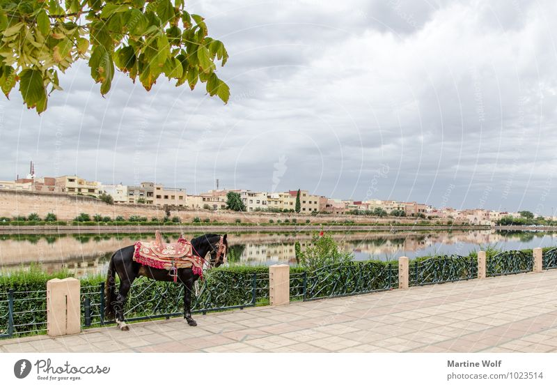 Palace Circle Moulay Ismail Pond Meknes Morocco Africa Town House (Residential Structure) Horse 1 Animal Vacation & Travel Basin Agdal Ville Imperial Reflection