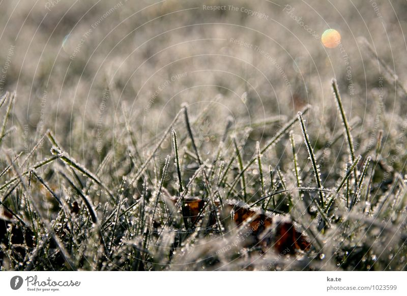 sugar-coated lawn Nature Plant Winter Beautiful weather Ice Frost Grass Leaf Meadow Cold Natural Green White Calm Idyll Moody Subdued colour Exterior shot