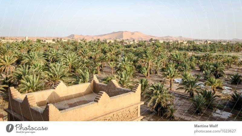 Erg Chebbi Nature Landscape Sand Plant Palm tree Desert Oasis Merzouga Morocco Africa Vacation & Travel Province of Errachidia Beach dune oasis city