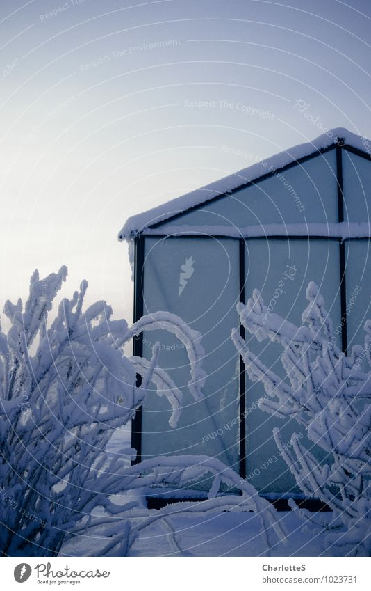 glass house Cloudless sky Winter Ice Frost Snow Snowfall Plant Bushes Greenhouse Tropical garden Meadow Field Hut Facade Roof Glass Steel Rust Drop Blue Calm