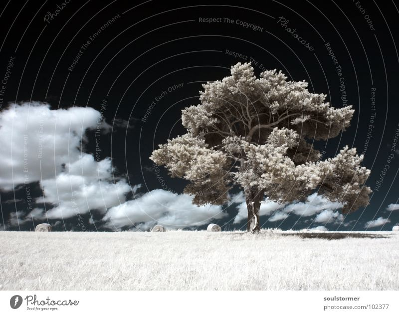 All alone Infrared Infrared color Black filter Clouds White Wood flour Light Grass Meadow Plant Green Tree Edge of the forest Clump of trees Grief Distress Sky