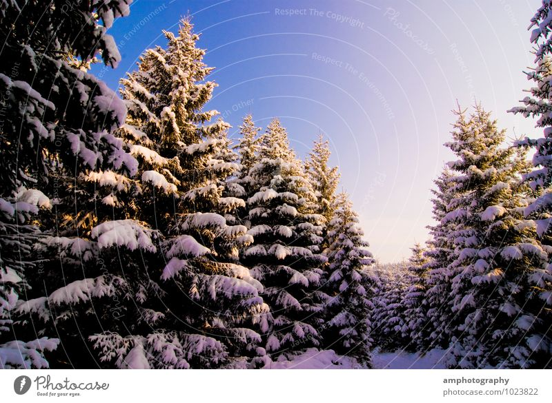 winter forest Nature Landscape Animal Sky Winter Beautiful weather Snow Tree Forest Mountain Erz Mountains Wood Discover Relaxation Cold Blue White Contentment