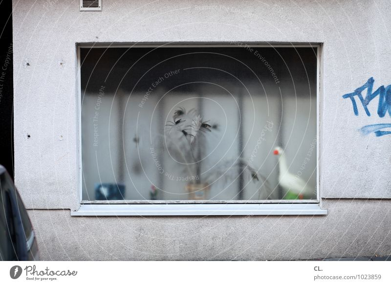 City Plant House (Residential Structure) Animal Window Wall (building) Street Graffiti Wall (barrier) Flat (apartment) Dirty Living or residing Decoration Kitsch Hideous Goose