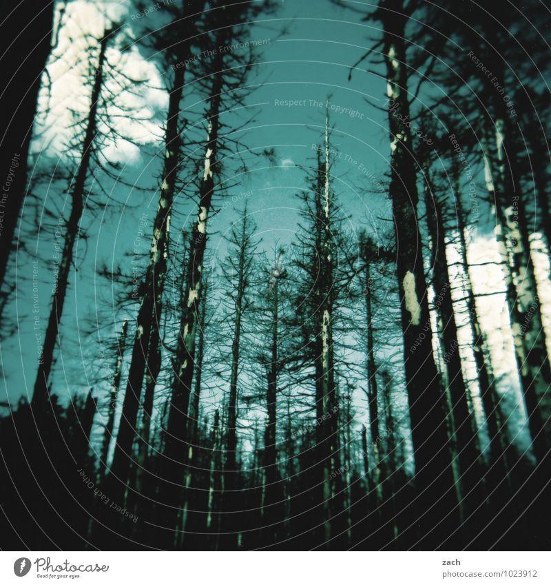 Sky Nature Blue Plant Tree Clouds Dark Forest Black Fire Blaze Creepy Burn Drought Coniferous trees Coniferous forest