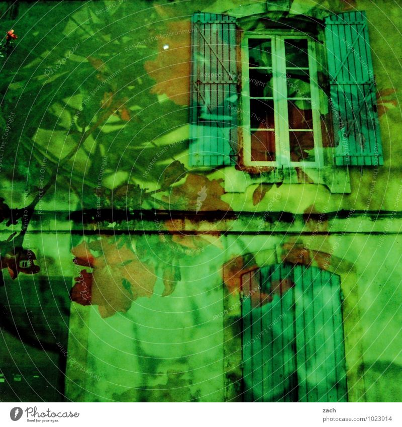 Plant Green Tree Leaf House (Residential Structure) Window Wall (building) Blossom Building Wall (barrier) Facade Dream Growth Living or residing Blossoming