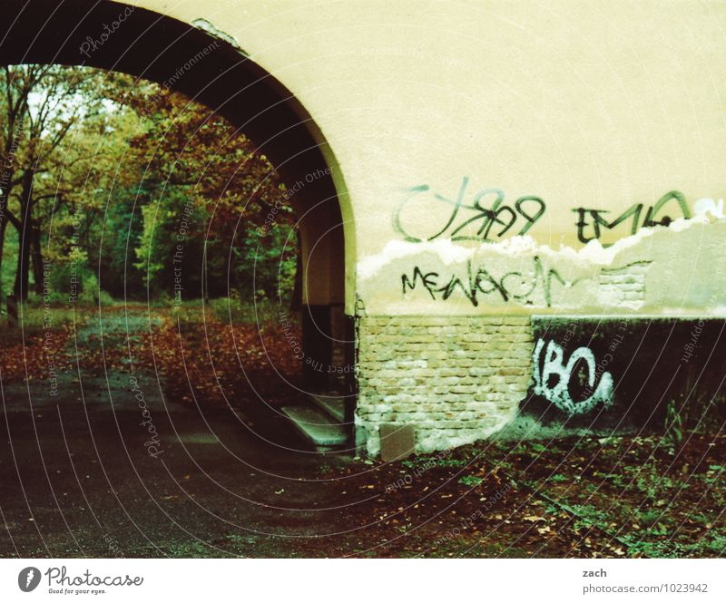 passage Autumn Winter Bad weather Plant Tree Leaf Autumn leaves Autumnal Park Forest House (Residential Structure) Ruin Gate Wall (barrier) Wall (building)