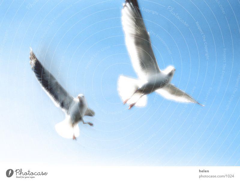 Nature Sky Ocean Freedom