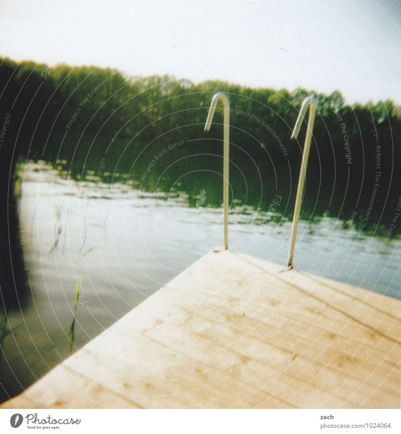 Vacation & Travel Plant Green Summer Tree Forest Swimming & Bathing Lake Wet Lakeside River Swimming pool Sunbathing River bank Footbridge Summer vacation