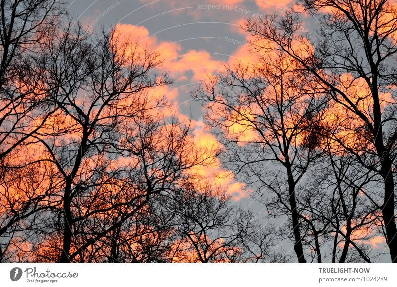 New morning Environment Nature Landscape Fire Air Sky Clouds Sunrise Sunset Sunlight Winter Beautiful weather Tree Treetop oaks Park Esthetic Exceptional