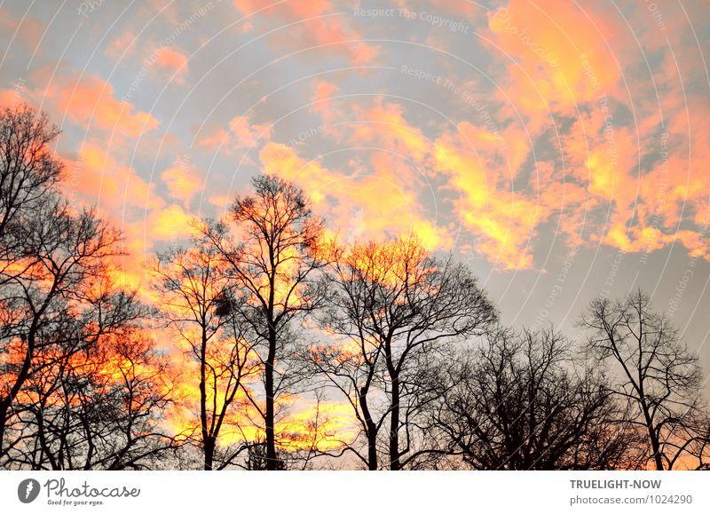 Sky Nature Plant Tree Landscape Clouds Winter Forest Black Environment Yellow Emotions Happy Horizon Orange Park