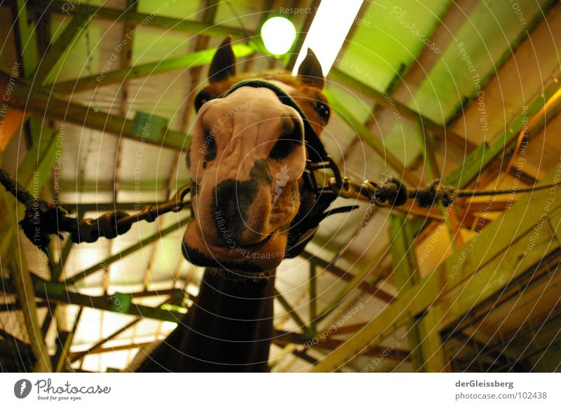 Green Animal Life Wood Bright Nose Nose Rope Horse Ear Curiosity Odor Neck Mammal Snout Chained up