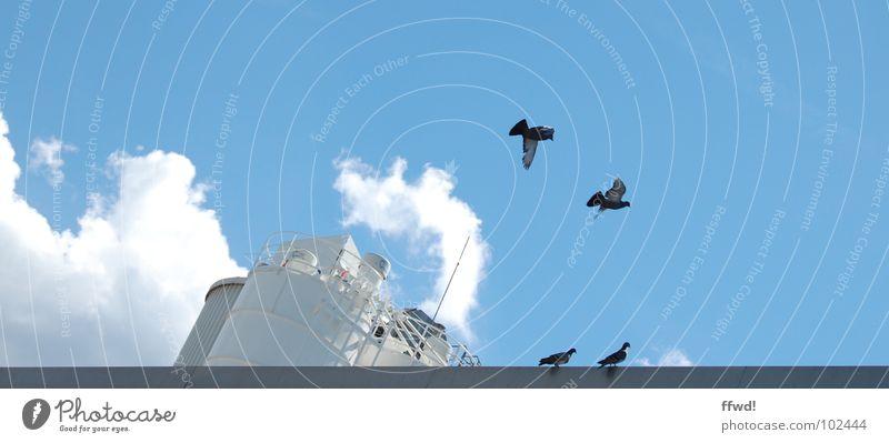 Sky Blue Summer Clouds Bird Fog Flying Industry Aviation Wing Exhaust gas Pigeon Steam Animal Silo Judder