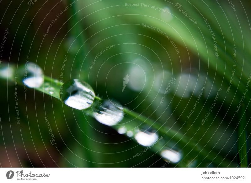 A 5.4 on the droplet scale. Environment Plant Elements Water Drops of water Beautiful weather Bad weather Rain Grass Leaf Garden Park Meadow Mirror Disco ball