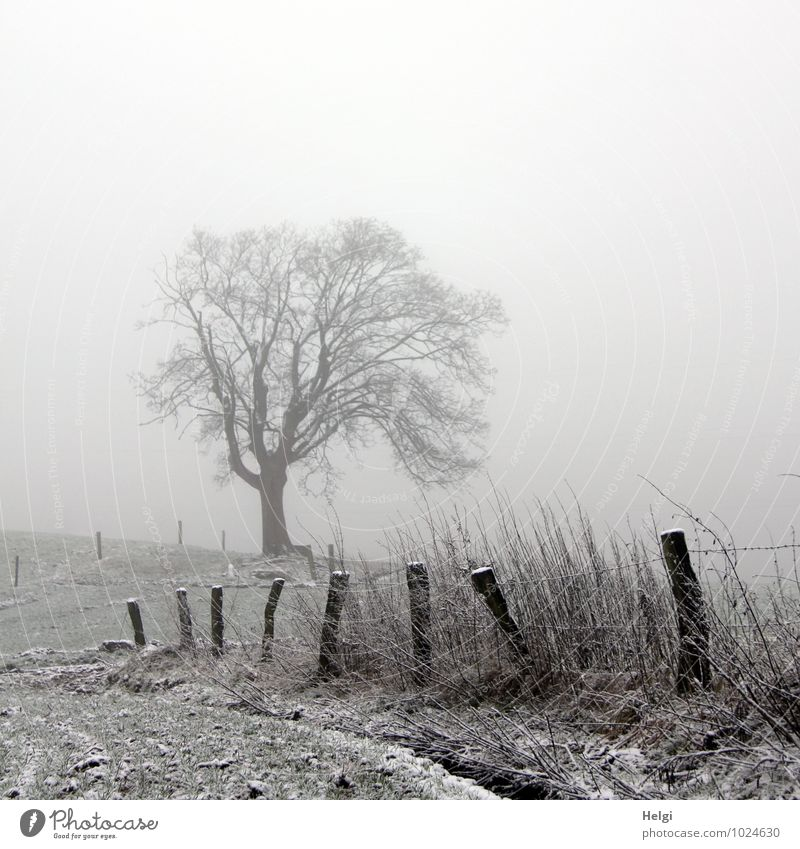 Decembre Nebula Environment Nature Landscape Plant Winter Fog Ice Frost Snow Tree Grass Field Fence Fence post Wood Stand Authentic Simple Uniqueness Cold