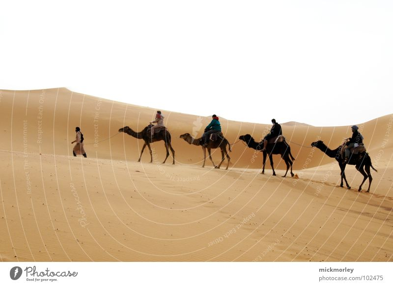 Sun Vacation & Travel Yellow Sand Warmth Earth Hiking Adventure Physics Desert Hot Africa Beach dune Camel Morocco