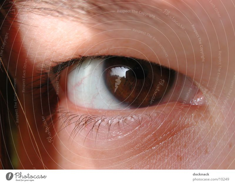 Eye with contact lens Contact lense Macro (Extreme close-up) Human being Eyes Looking