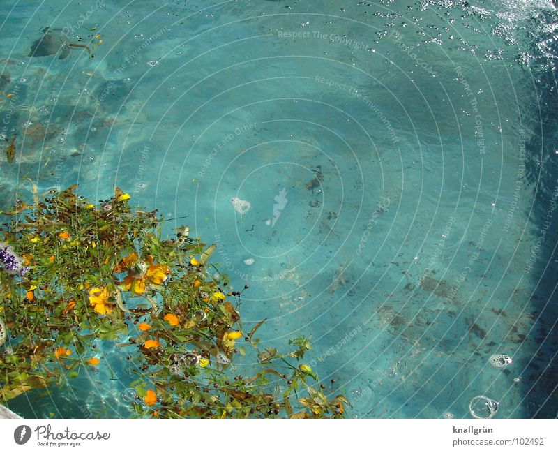 Before cleaning Blossom Leaf Turquoise Swimming pool Air bubble Surface of water Wet Cleaning Summer Water Blue Float in the water