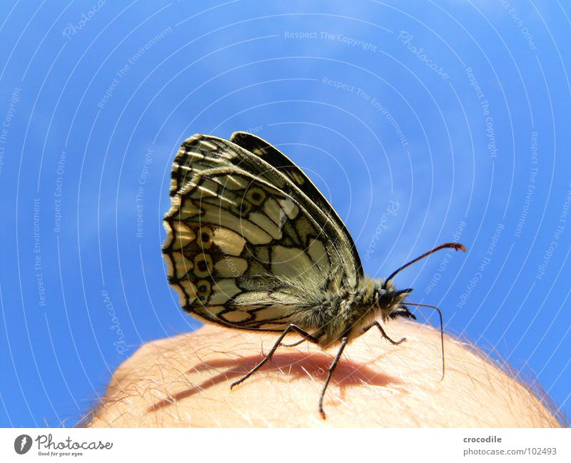 Hand Beautiful Sky Sun Blue Summer Animal Freedom Legs Skin Flying Wing Insect Pelt Butterfly