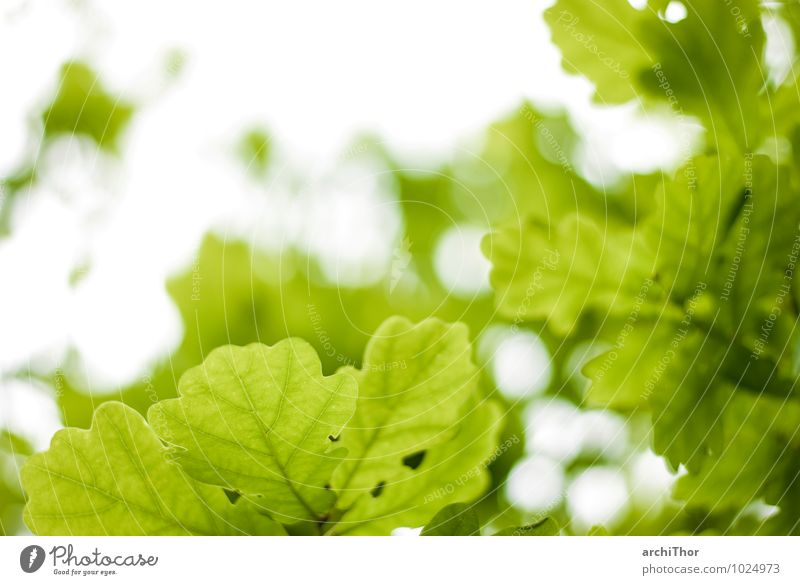 Sky Nature Vacation & Travel Plant Green Summer Tree Leaf Calm Forest Environment Spring Garden Park Contentment Foliage plant