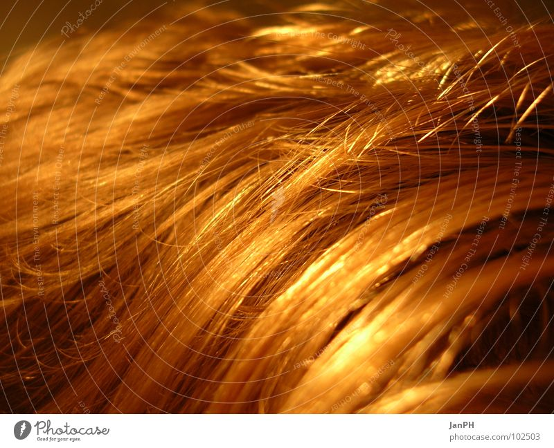 Hair and hairstyles Head Field Blonde Wheat