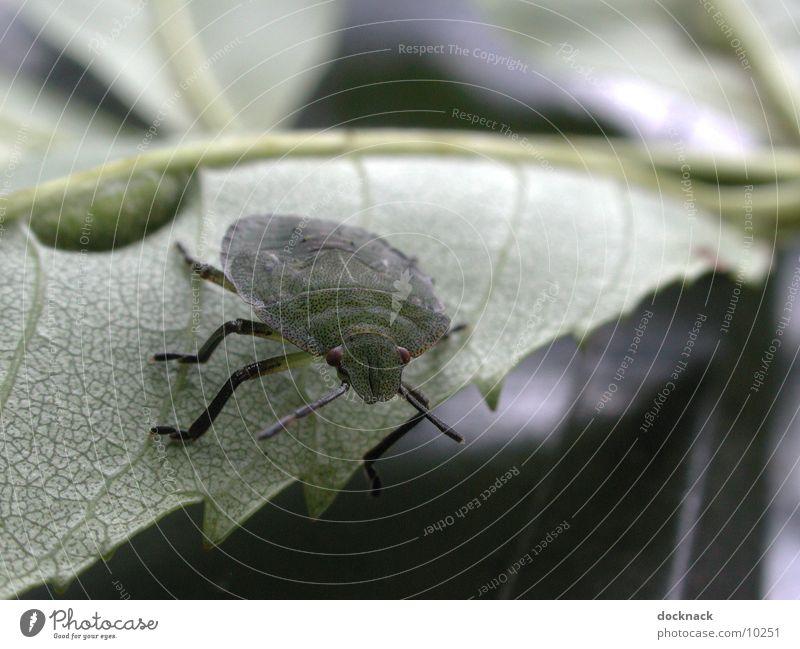 bug Bug Animal Leaf Macro (Extreme close-up) Nature