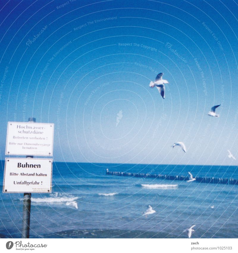 Watermark l good prospects Summer Beach Ocean Waves Nature Cloudless sky Coast Baltic Sea Animal Bird Wing Seagull Group of animals Signs and labeling Signage