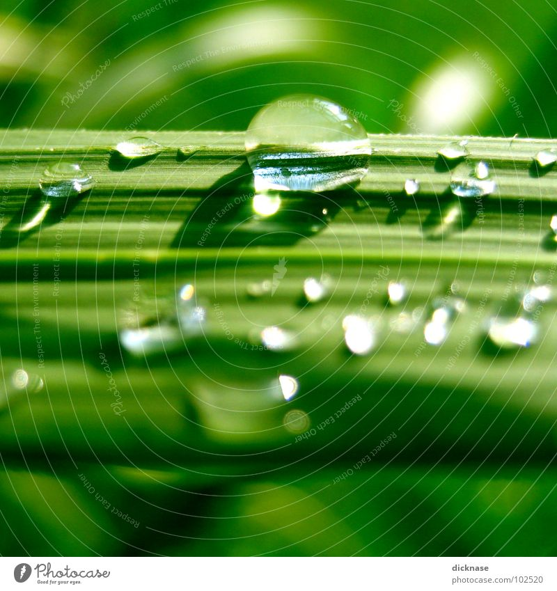Water Green Beautiful Summer Ocean Beach Relaxation Grass Drops of water Stripe Common Reed Spa Zoom effect Lined