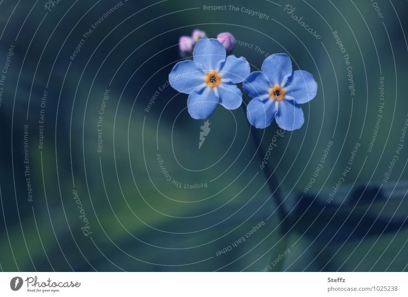 Nature Blue Plant Summer Flower Couple Together Friendship Copy Space Blossoming Romance Attachment Relationship Blossom leave Sympathy Valentine's Day