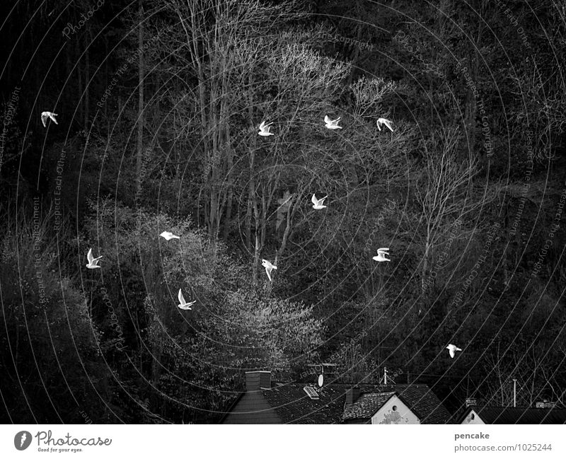 eleven-man advice Landscape Elements Winter River bank Animal Bird Group of animals Flock Sign Movement Flying Romp Moody Happiness Homesickness Gull birds