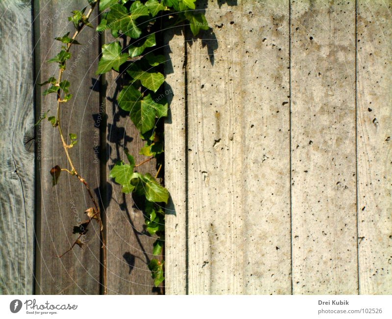 Green Plant Wood Wall (barrier) Concrete Ivy Printed Matter House of worship Wood flour