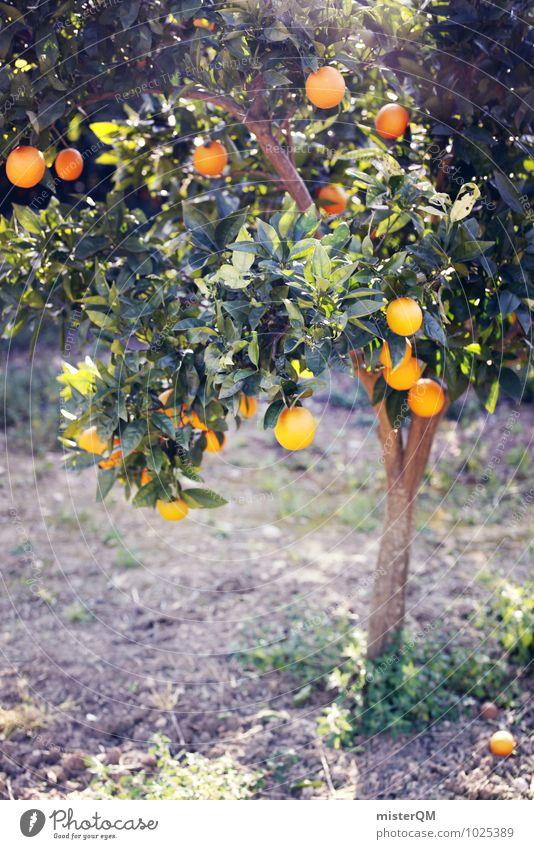 Vitamin C tree. Environment Nature Landscape Esthetic Orange Orange juice Orange tree Tree Health care Healthy Eating Delicious Growth Mature Harvest